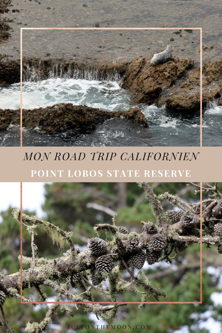 Blog Photographie Voyage USA Californie Point Lobos