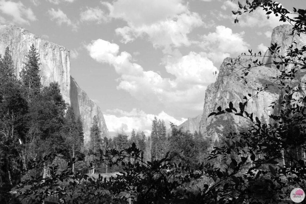Mon Road Trip californien : Yosemite Park