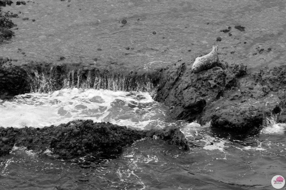 Mon Road Trip californien : Point Lobos State Reserve